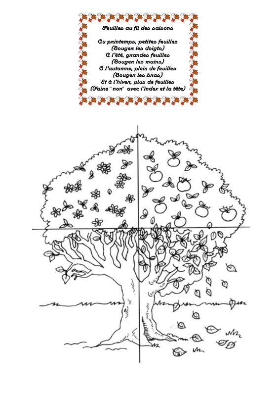 Feuilles au fil des saisons - Taille citronnier 4 saisons ...