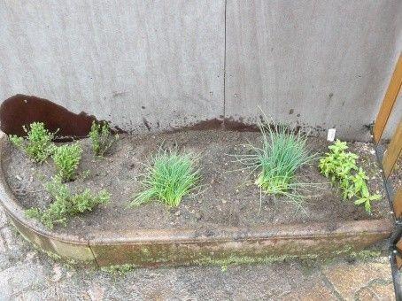 Jardin p dagogique plantes aromatiques 3 for Jardin plantes aromatiques