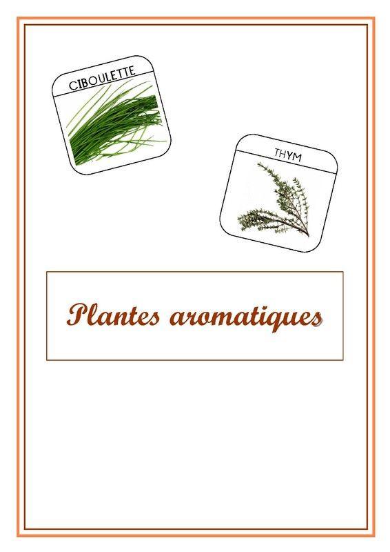 Imagier du jardin les plantes aromatiques - Les herbes aromatiques du jardin ...