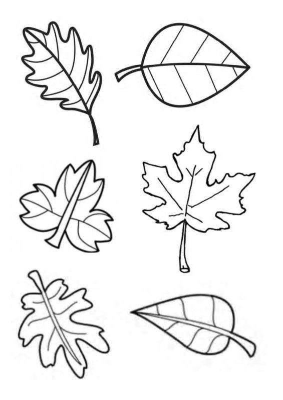 Gabarit feuilles d 39 automne pour tableau collectif - Feuille automne dessin ...