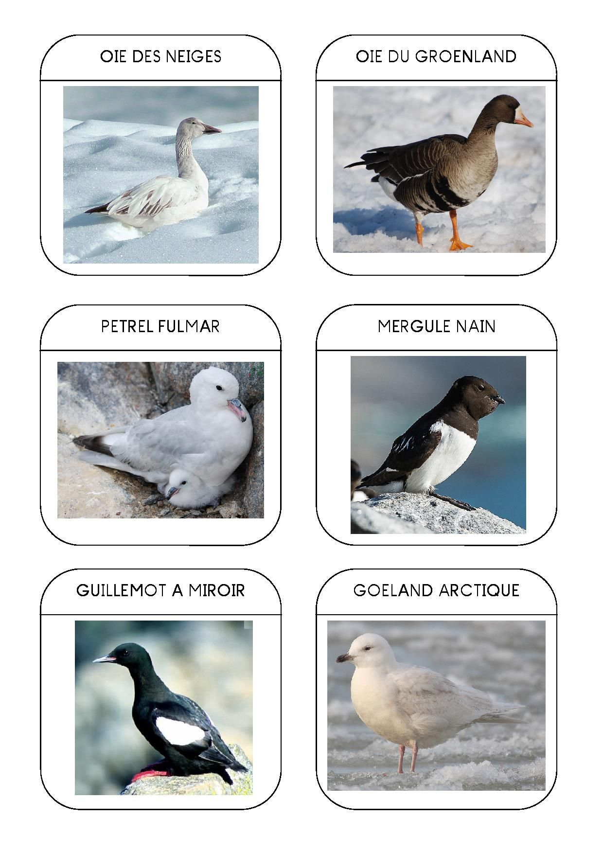 Imagier des animaux polaires page 11 - Animaux pole nord ...